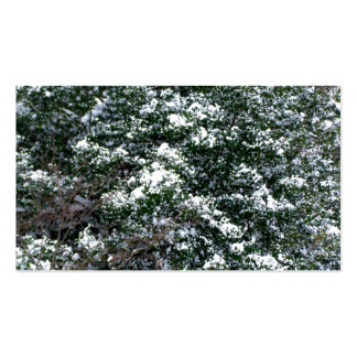 Snow On A Holly Tree Pack Of Standard Business Cards