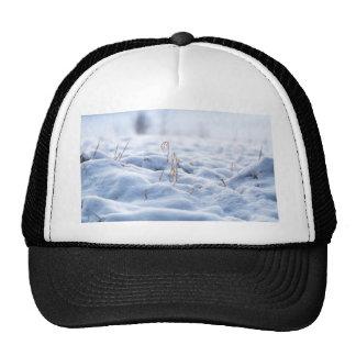 Snow on a meadow in winter macro cap