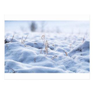 Snow on a meadow in winter macro postcard