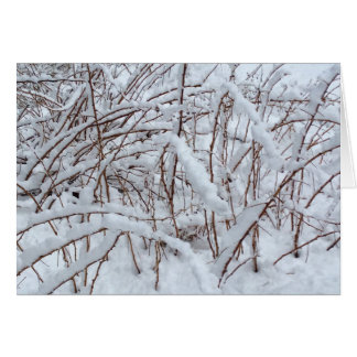 Snow on a Raspberry Patch --- Card