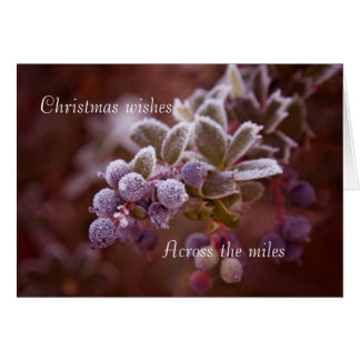 Snow on Berries Card