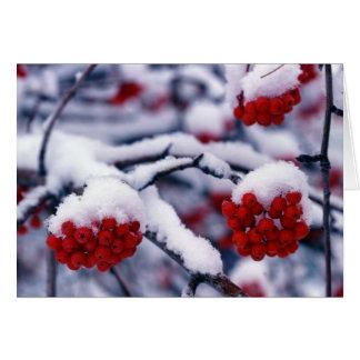 Snow on European Mountain Ash Berries, Utah. Greeting Card