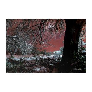 Snow on olive trees acrylic print