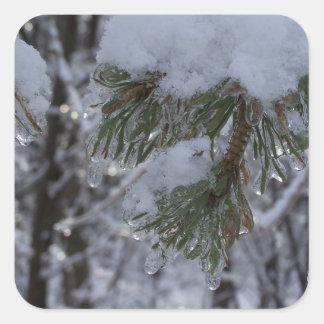 Snow on pine tree square sticker