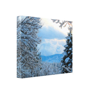 Snow on Pine Trees in Colorado Rocky Mountains Canvas Print