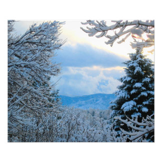 Snow on Pine Trees in Colorado Rocky Mountains Photo