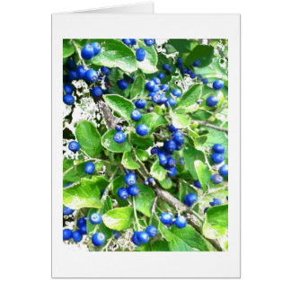 Snow on Sapphire Berries Holiday Card