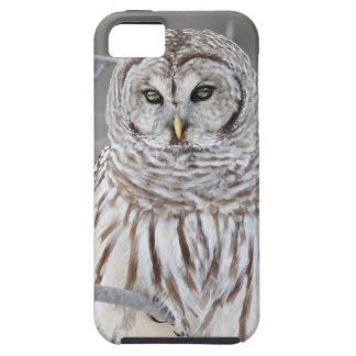 Snow Owl Case For The iPhone 5