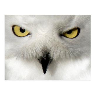 Snow Owl Post Card