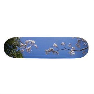 Snow picture skate boards