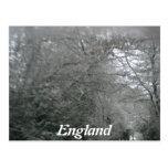 Snow Scene Postcards
