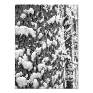 Snow Speckled Tree BW Photo Print
