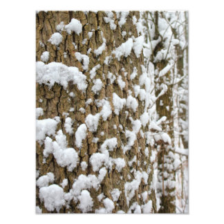 Snow Speckled Tree Photo Print