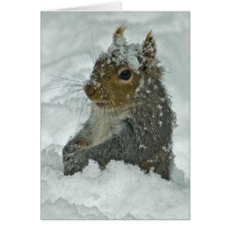 Snow Squirrel Card