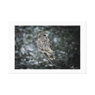 Snow storm Barred Owl Canvas Print