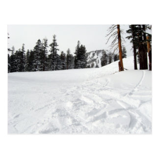 Snow Trails Ski & Snowboard Postcard