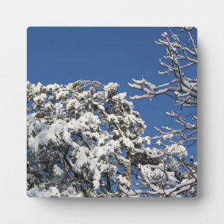 snow trees and sky display plaques