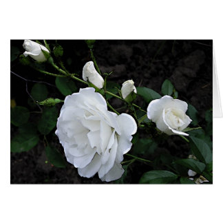 Snow White Rose - Invitation Greeting Card