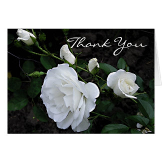 Snow White Rose - Thank You Card
