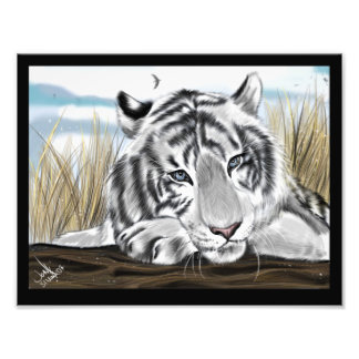 Snow White Tiger Original Artwork Photo Prints