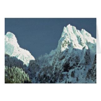 Snow-White Trees Cards