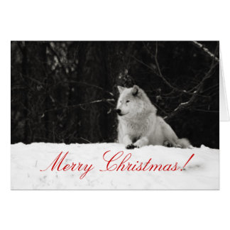 Snow Wolf Christmas Card