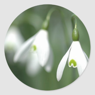 snowdrop, from the flower gift collection classic round sticker