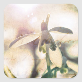 Snowdrop lyrical 01.01q square sticker