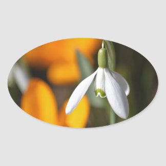 snowdrop oval sticker