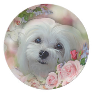 Snowdrop the Maltese Display Plate