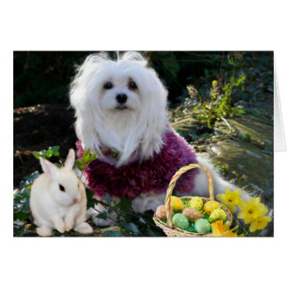 Snowdrop the Maltese Easter Card