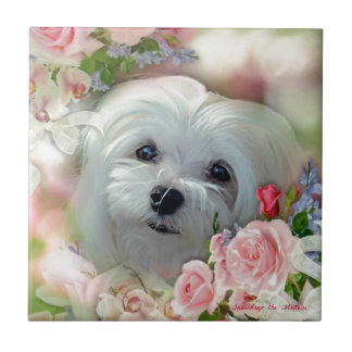 Snowdrop the Maltese Small Square Tile