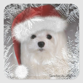 Snowdrop the Maltese Sticker