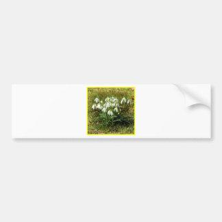 Snowdrops 02.2 (Schneegloeckchen) Bumper Sticker