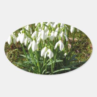 Snowdrops 02.2 (Schneegloeckchen) Oval Sticker
