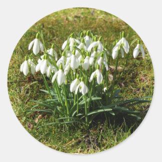 Snowdrops 02.2 (Schneegloeckchen) Round Sticker