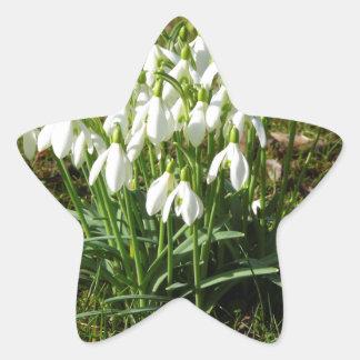 Snowdrops 02.2 (Schneegloeckchen) Star Sticker