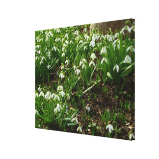 Snowdrops II (Galanthus) White Spring Flowers Canvas Print