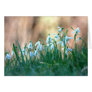 Snowdrops in Spring Card