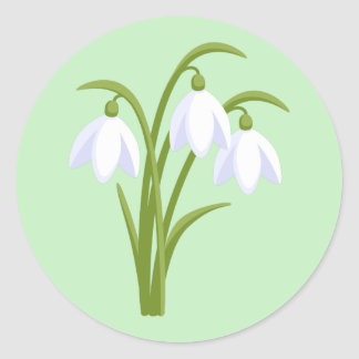 Snowdrops - Spring Flowers on Green Classic Round Sticker