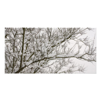 snowed branches personalized photo card