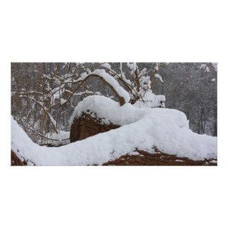 snowed tree branch photo card template