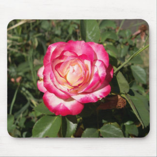 snowfire rose mouse pad