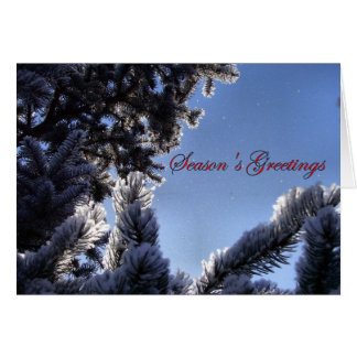 Snowflakes and Pine Tree Season's Greetings Note Card