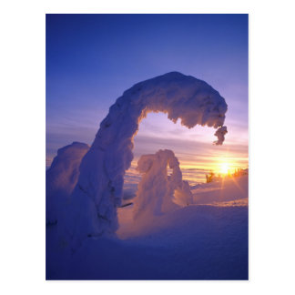 Snowghosts in the Whitefish Range of Montana Postcard