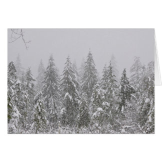 Snow's Falling on Fir Trees Card