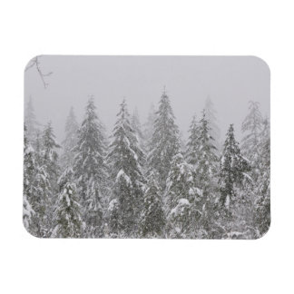 Snow's Falling on Fir Trees Rectangular Photo Magnet