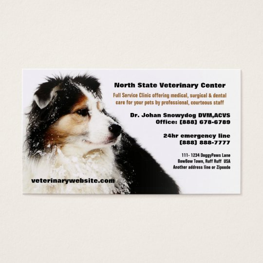 snowy australian shepherd veterinarian vet clinic business