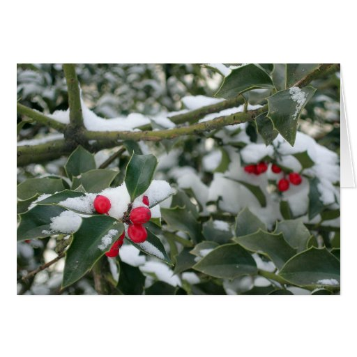 snowy berries greeting cards