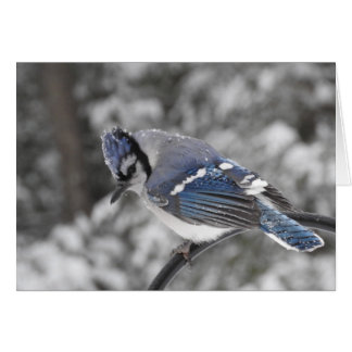 Snowy Blue Jay Greeting Card, Blank Inside Card